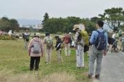 畑の雑草の観察