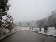 本格的な降雪