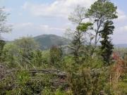 間伐跡地の景観