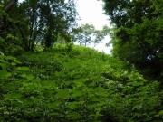 夏草や兵どもが夢の跡を想像する内壕