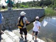 修景池での昆虫採集
