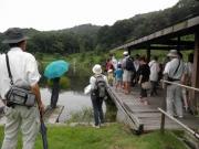修景池の四阿で昆虫観察