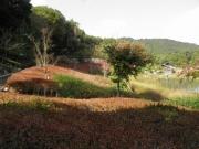 修景池のドウダンツツジ