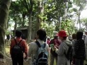 竹島照葉樹林内の観察