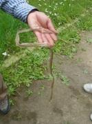 シマヘビの脱皮殻