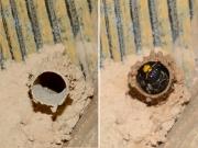 エントツドロバチの巣