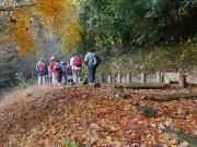 落葉に敷き詰められた散策路