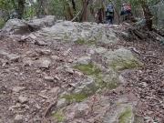領家変成岩