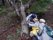 πメジャーで木の直径を測定