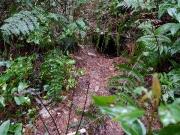 アナグマの古い巣