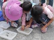 ホウネンエビを観察する子どもたち