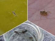 カナールで見つかったアメンボ、ヤゴ、カエル