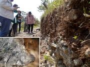 蛇紋岩地質の解説
