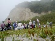 コウボウムギと浜の植物観察