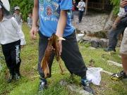 イノシシのアゴの骨を発見!