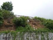 イノシシの掘り返し跡