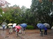 雨の豊橋公園