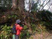 風化した岩石と樹木
