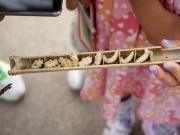 タイワンタケクマバチの巣