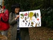 観察会中に見つけられた葉や果実