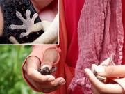 ヤモリの手