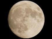十五夜前日の月