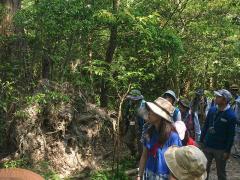 足元が岩盤であることがわかる倒木の根の状態