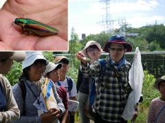昆虫に詳しい一般参加の方からヤマトタマムシの解説