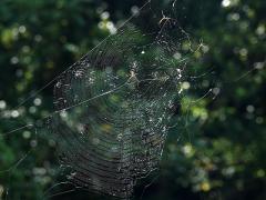 半分ずつ張られた蜘蛛の巣の様子