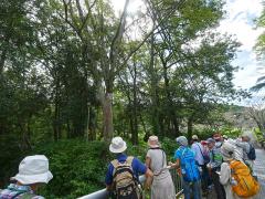 様々な木が見られる河畔林