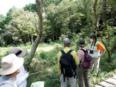 葦毛湿原の植物を解説