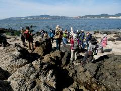 竹島の岩石の解説